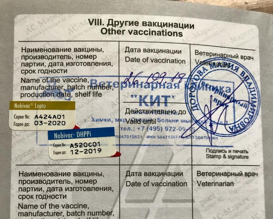 www.mymaltipoo.ru